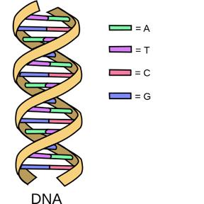 DNA Double Helix Image DecodeME